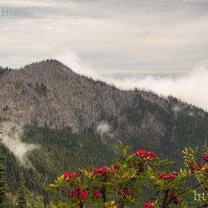 A view from the Hurricane Ridge Passage
